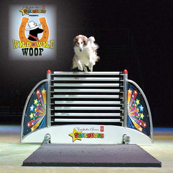 superdogs - website photo3