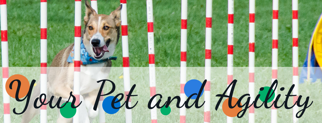 Dog Agility 1080 x 414 your dog copy