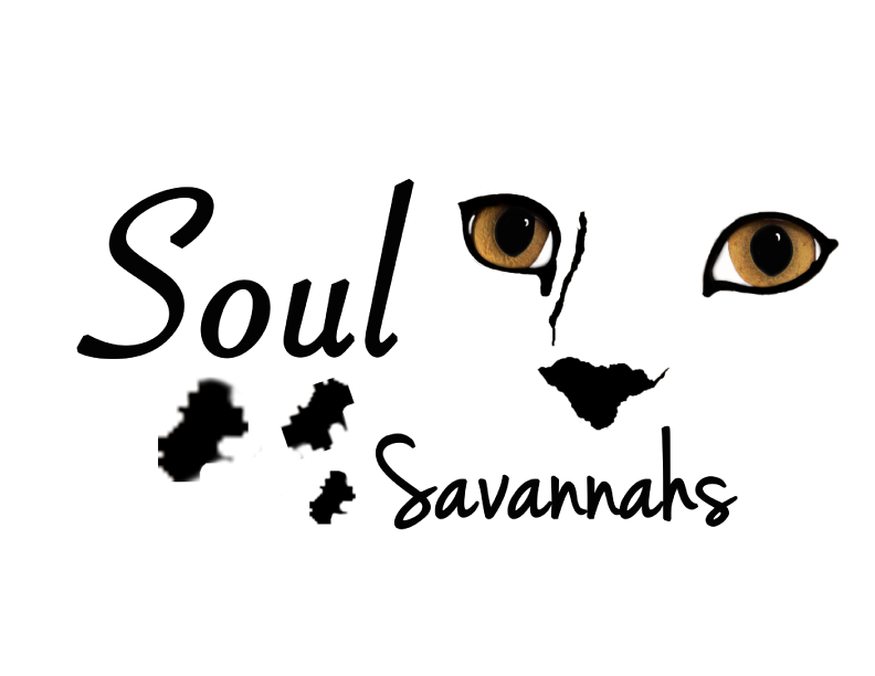 Soul Savannahs - Booth 237